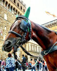 Questo #cavallo #affamato sembra voglia #mangiare la #testa di una #turista ehehehe  #casarovai #firenze #florence #horse #eat #carrozza #piazza #uffizi #piazzadellasignoria #in una #giornata di #sole