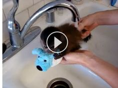 Squee! Baby Monkey Gets A Bath