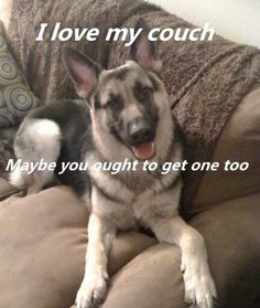 The German Shepherd Dog Community's photo. Cute Puppies, Cute Dogs, Dogs And Puppies, Doggies, Animals And Pets, Funny Animals, Cute Animals, Animal Memes, I Love Dogs