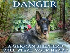 I <3 German Shepherds. Did you know there are many of them in shelters?