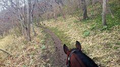 今日も良い天気です(^^)トレッキング日和ですね~。森の中でエゾシカさんたちに会いましたよ。一緒の道を通るの?