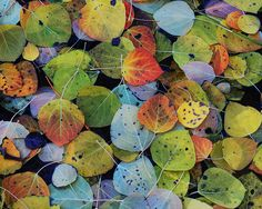 aspen leaves, by Tim Gallivan http://www.flickr.com/photos/tgalli55/with/4054492389/ #nature