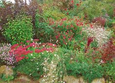 www.rustica.fr - Avoir des massifs toujours fleuris