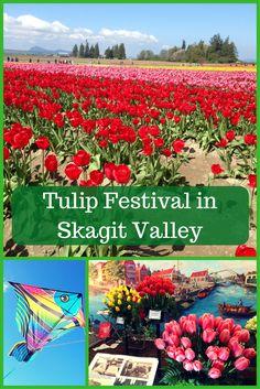 Tulip Festival in Sk