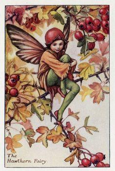 Hawthorn Flower Fairy Vintage Print c.1927 por FlowerFairyPrints