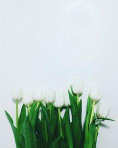 #flowerpower ✨ --- #vsco #vscopx #VSCOcam #vscosoft #tulips #flowers #nature #vsconature #flowerpower #vscopoland #vzco #vzcopoland #livefolk #liveauthentic  #iphoneonly #visualgang #household #instadaily