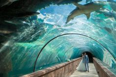 Let your wedding dreams come to life at Atlantis Resort!