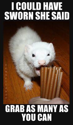 Ferrets love our N-Bone ferret chew treats! They're super delicious.   http://www.n-bone.com/product_display.ph p?id=22