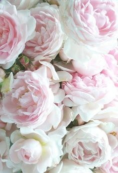 Old country roses (cabbage roses) for pink #country wedding ... Wedding ideas for brides, grooms, parents  planners ... http://itunes.apple.com/...  plus how to organise an entire wedding  The Gold Wedding Planner iPhone App