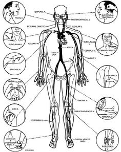 There are efficient anti-inflammatory, anti-cancer and also anti-oxidant benefits, and its full of vitamins and minerals that provide detox-support along with a lot of other essential nutrients which enhance great health. Self Defense Moves, Self Defense Martial Arts, Art Martial, Martial Arts Techniques, Self Defense Techniques, Knife Fighting Techniques, Jiu Jutsu, Life Hacks, Calendula Benefits