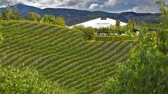 Picnic In the Napa Valley - Where to picnic and the best places to grab food to go!
