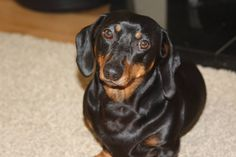 Happy shiny dog!!  Thanks to  Seahorse Atlantic dog supplement