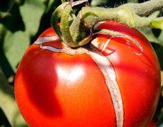 Bra Tips, Garden Inspiration, Gardening Tips, Hobbies, Backyard, Green, Plants, Patio, Backyards