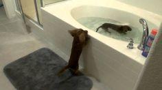 Deux chiens font la course pour prendre le bain