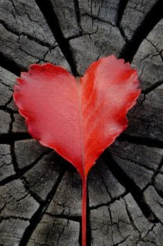 Your heart.Below, find fun, amazing facts about your own ticker. I Love Heart, With All My Heart, Happy Heart, Heart Pictures, Heart Images, Heart In Nature, Heart Art, In Natura, Fire Heart