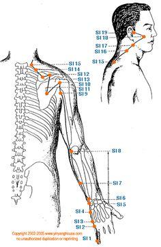 (SI) Small Intestine Meridian - Graphic | Yin Yang House