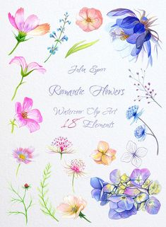 Watercolor Romantic Flowers Clipart Hydrangea Cosmos by JuliaSpiri