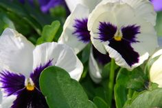 Afbeeldingsresultaat voor natuur bloemen