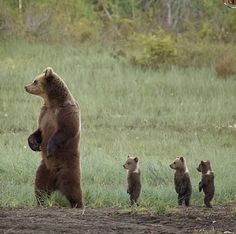 Cute Little Animals, Cute Funny Animals, Funny Cats, Nature Animals, Animals And Pets, Pics Of Animals, Animals In The Wild, Strange Animals, Tier Fotos