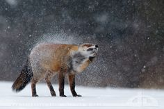 Shaking off the Winter by *thrumyeye on deviantART