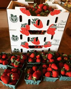 Why YES those are local strawberries in your bin today they are perfect & sweet.& fresh out of the fields  #teamleeandmarias #supportlocal #supportlocalfarmers #spreadthehealth #inmybinthisweek