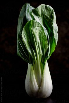 Pak choi ready to be prepared for use in a recipe by Darren Muir.