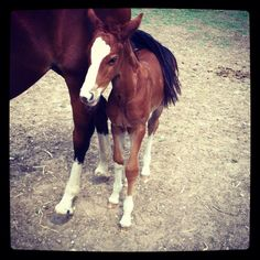 Baby horse under mom's long tail