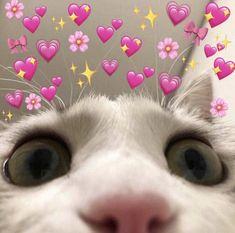⃗ 𝒀𝒐𝒐𝒏𝑮𝒊 𝑩𝒐𝒕𝒕𝒐𝒎 𝒊𝒔 𝑳𝒊𝒇𝒆₊̇° ⚘݄*₊˚Aquí podrás enc… # De Todo # amreading # books # wattpad Cute Cat Memes, Cute Love Memes, Funny Animal Memes, Funny Cats, Funny Animals, Kittens Cutest, Cats And Kittens, Cute Cats, Cute Cat Wallpaper