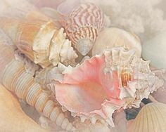 Dreaming Of The Seashore Print By Elizabeth Budd