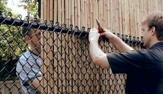 Bamboo on Chain-Link Fence