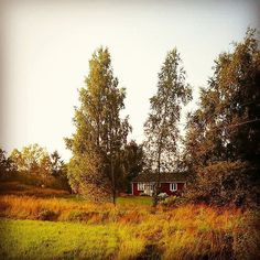 customer pic: the cabin in the woods.. #travelforlife #travel #customerpic #sweden #abaufsland #familienurlaub #landleben #familyholiday #countryside #nature #natur #tflhh #cabin #hütte #ferien #ferienhaus