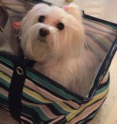 Traveling Belle!