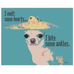 Chihuahua! Just like Peeks