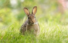 European Rabbit by Hanna Knutsson on 500px