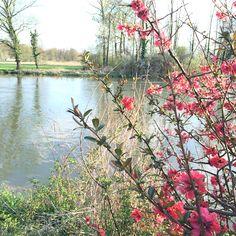 Paysage printemps fleurs