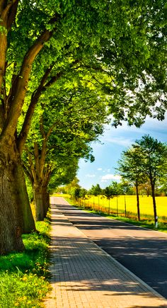 Sunny country road in northern Germany • photo: Bettina Lichtenberg on http://www.gettyimages.ca/detail/photo/country-road-royalty-free-image/145585141