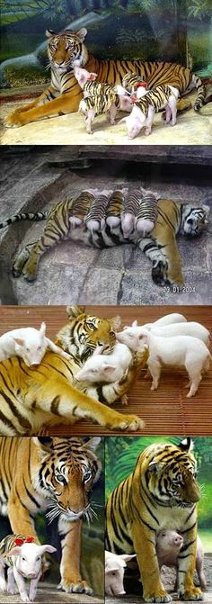 Our World's Wildlife - Community - Google+