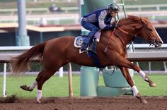 Victor Espinoza on a gorgeous horse. I don't know for sure, but I think it might be California Chrome