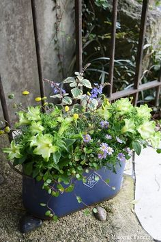 Container Flowers, Window Boxes, Easy Diy Crafts, Flower Boxes, Green Flowers, Container Gardening, Garden Landscaping, Flower Arrangements, Pots