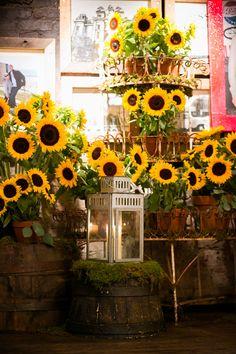 Sunflower Rehearsal Dinner Decor #VisitSalisburyNC #visitsalisburyrowan