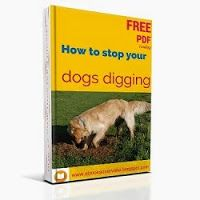 So what's the score with my dogs digging? Why are they doing it and how do I stop them destroying my beautiful back garden? Well here's the way your dog see's it and its very different from how you think! In fact it will answer a lot of your questions.