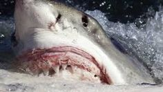 Afbeeldingsresultaat voor gevaarlijke dieren