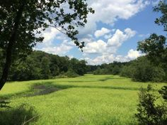 Marsh View trail, hiking and eagles at Mason Neck State Park