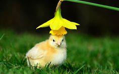 Come sto con questo #cappellino giallo?  Un nuovo #pulcino #fashion #blog :D   Guarda tutto qui: http://bit.ly/295Yg5A