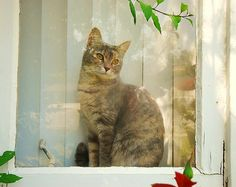 I like driving past houses with a cat in the window.  They really have it made don't they?