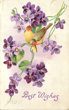 Best Wishes, Birds and Violets