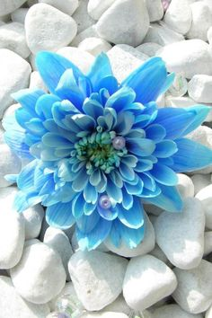 We've got the summer  pretty blue flower on beach stones