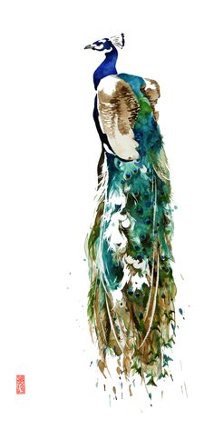 A white feathered peacock with a waterfall plumage.a rare and beautiful sight! Giclée and canvas prints available in my Etsy shop. Watercolor Peacock, Peacock Painting, Watercolor Animals, Watercolor Paintings, Bird Illustration, Illustrations, Flat Ideas, Water Colors, Peacocks