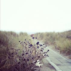 Photo by crystalgentilello • Instagram