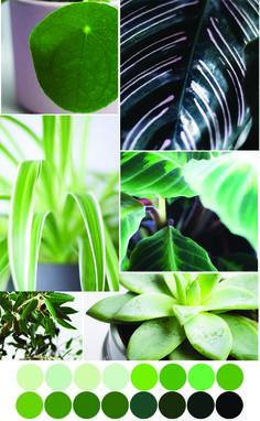 Grün Facetten Farbpalette - Tweed & Greet